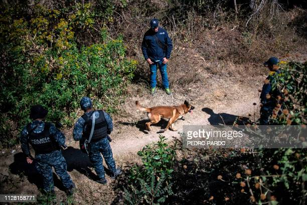 A mexican Federal Police dog takes part in the activities of the fourth National Search Brigade in Huitzuco de los Figueroa Guerrero state Mexico on...
