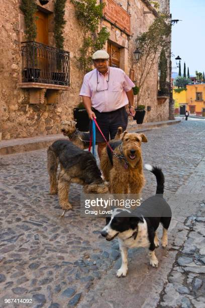 A Mexican man walks his dogs - SAN MIGUEL DE ALLENDE, MEXICO