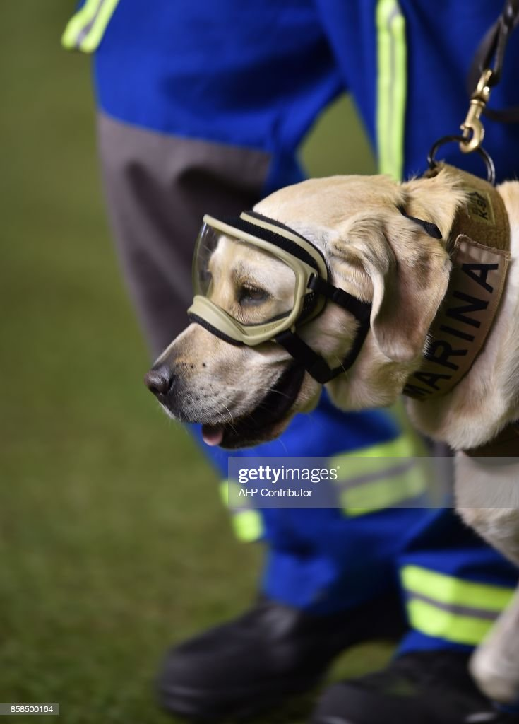 Mexican rescue dog 'Frida' is acknowledged for its job looking for victims of the last earthquake before the start of the World Cup 2018 qualifier football match Mexico vs Trinidad & Tobago at the Alfonso Lastras stadium in San Luis Potosi, Mexico, on October 6, 2017. /