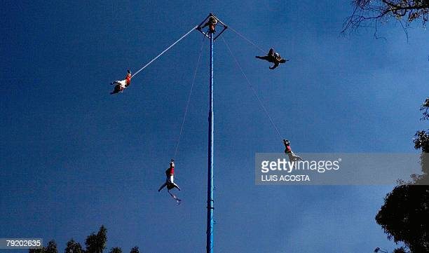 Mexican Totonaca natives perform the ritualistic dance of 'Los Voladores' in Mexico City 24 January 2008 'Los Voladores' is a Mexican tradition that...