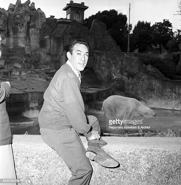 MexicanAmerican actor Anthony Quinn in Rome zoological garden in front of the bear's area Rome 1957