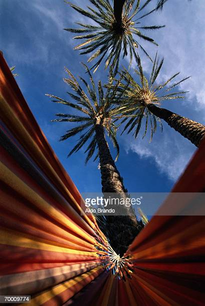 mexico, baja california, hammock hanging from palm trees, low angle - baja california peninsula stock pictures, royalty-free photos & images