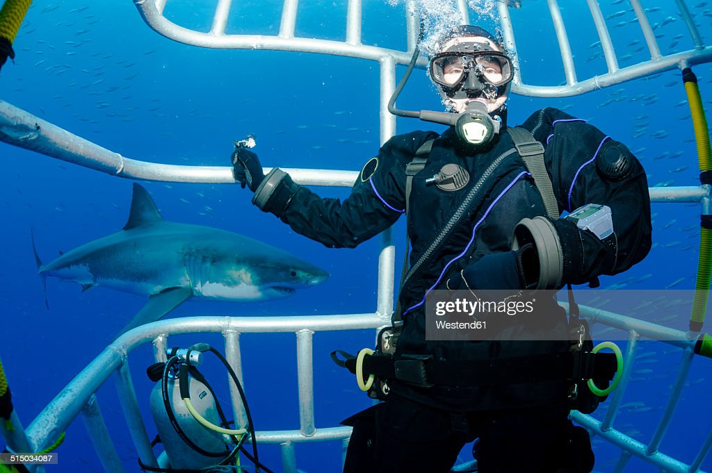Mexico, Guadalupe, Pacific Ocean, scuba diver in shark cage with white shark, Carcharodon carcharias, in the background : Stock Photo