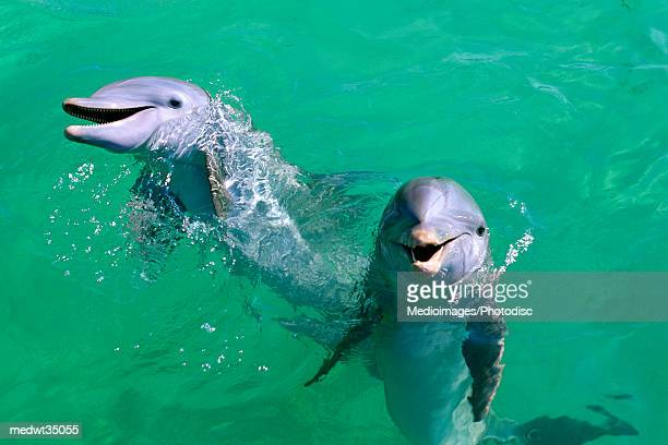 mexico, isla mujeres, bottle-nosed dolphins - isla mujeres stock pictures, royalty-free photos & images