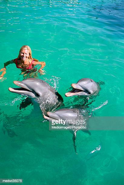 mexico, isla mujeres, woman playing with dolphins - isla mujeres ストックフォトと画像