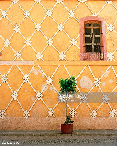 mexico, queretaro state, queretaro, potted plant in front of building - ケレタロ州 ストックフォトと画像