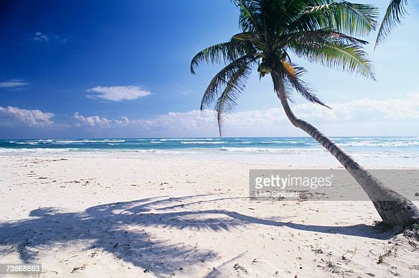 Mexico, Yucatan, Coast of Tulum, Single palm tree on beach