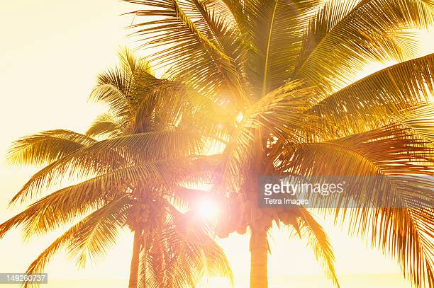 Mexico, Yucatan, Palm trees at sunset