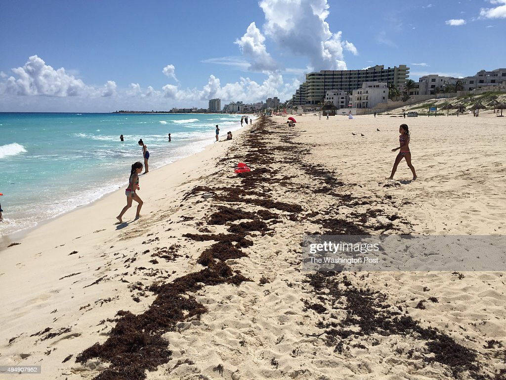 Seaweed on Playa Delfines in Cancun, a popular tourist destination
