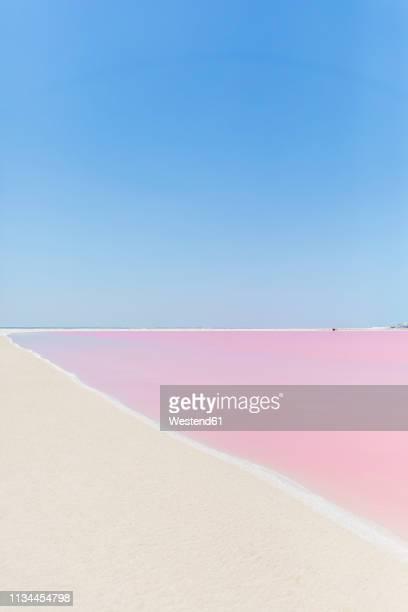 mexiko, yucatan, las coloradas, pink lake salt lake - magenta stock pictures, royalty-free photos & images
