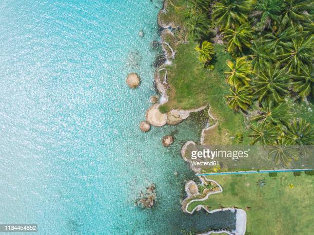 mexiko, yucatan, quintana roo, lagoon of bacalar, palm treee at turquoise water, drone image - quintana roo stock pictures, royalty-free photos & images