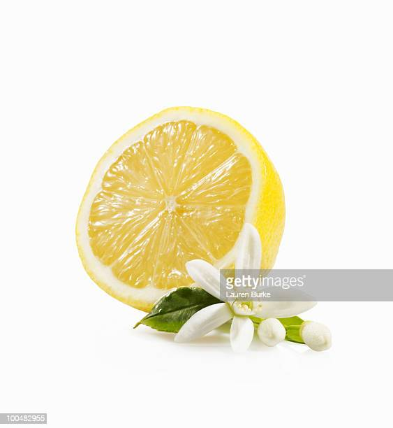 meyer lemon with blossom - orange blossom stock photos and pictures