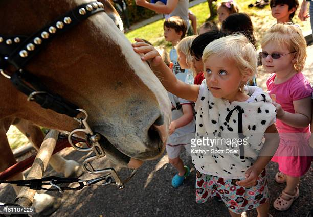 Mia Keene gets her chance to pet Prince one of the Belgium Draft horsesPaddington Station Preschool in Denver hosts a horsedrawn wagon from Happy...