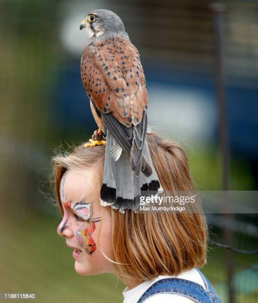 Mia Tindall seen with her face painted stands with a kestrel on her head after watching a falconry demonstration on day 3 of the 2019 Festival of...