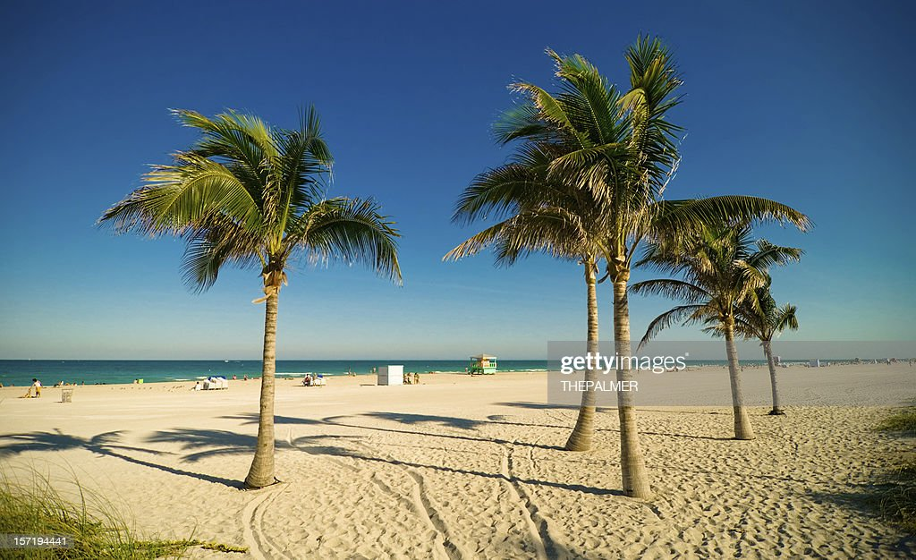 Miami Beach Palms Stock Photo
