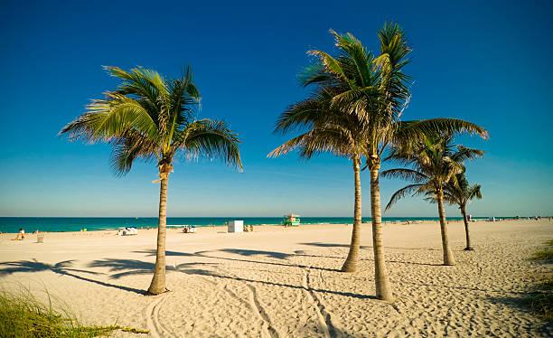 Miami Beach Palms Wall Art Photo Id 157194441