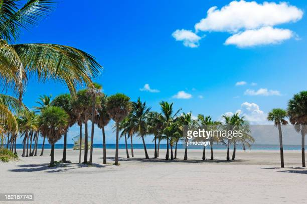 Praia de miami tropical paradise