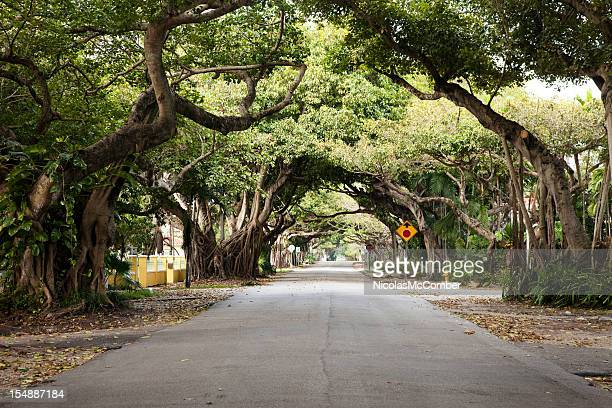 miami coral gables street - banyan tree stock pictures, royalty-free photos & images