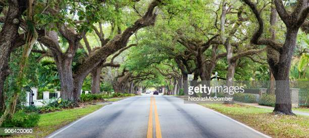 miami coral gables street under tree canopy panorama - coral gables stock pictures, royalty-free photos & images