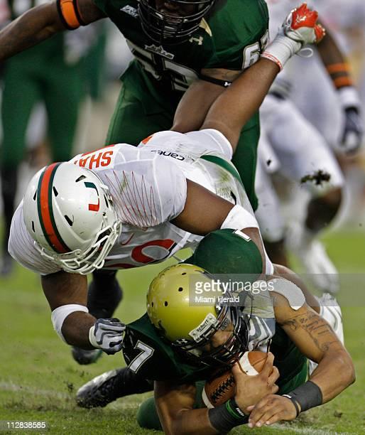 Miami linebacker Darryl Sharpton sacks South Florida quarterback BJ Daniels in the third quarter of play Miami defeated South Florida 3110 at Raymond...
