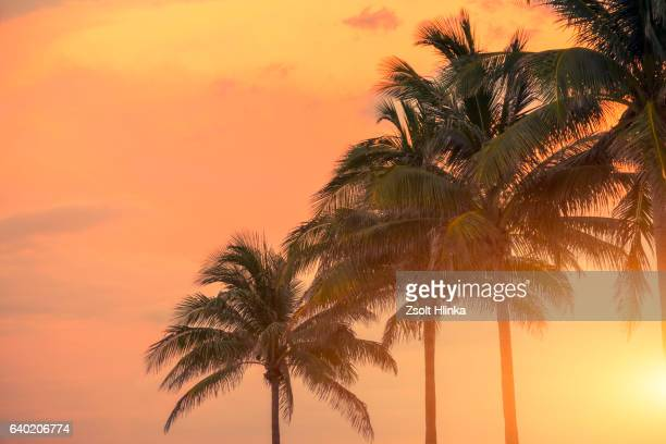 miami palms - miami florida stock pictures, royalty-free photos & images