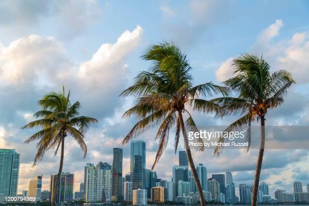 miami skyline in golden light - 南東 ストックフォトと画像