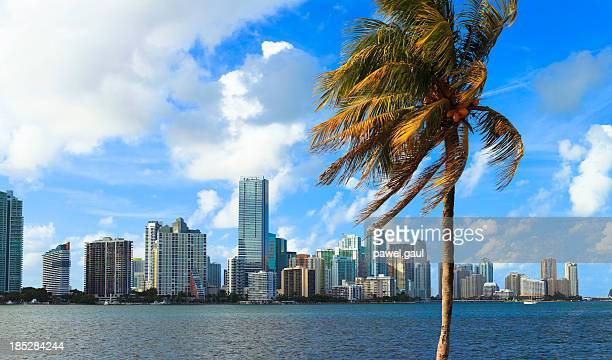 Miami skyline with palm tree in foreground