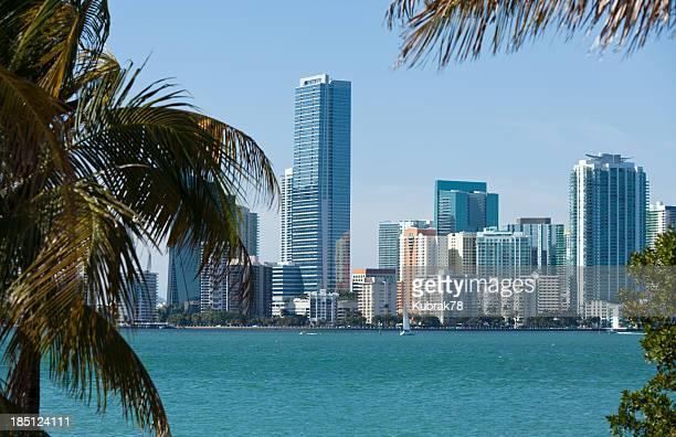 Miami Skyline with Palm Trees