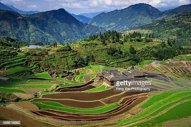 Miao Village by terraced field, Jiabang Guizhou China