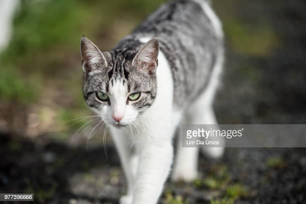 miau - um animal stockfoto's en -beelden