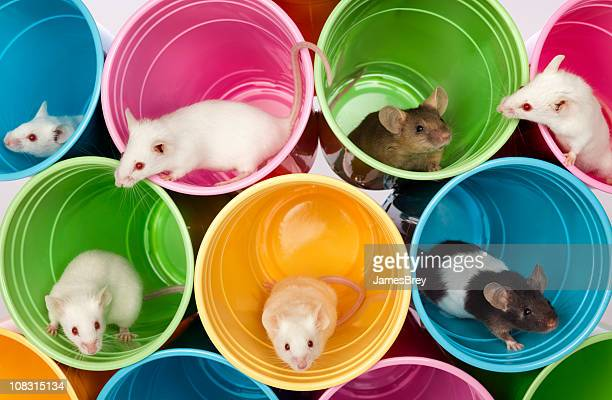 mice living in colorful mouse apartments, condos of plastic cups - domestic animals stock pictures, royalty-free photos & images