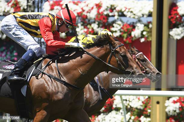 Michael Dee riding Navagio wins Race 1 during Melbourne Racing at Flemington Racecourse on January 28 2017 in Melbourne Australia