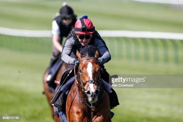 Michael Hills riding Rajasinghe in a gallops before racing at Newmarket racecourse on April 18 2018 in Newmarket England