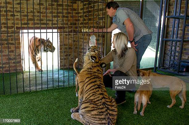 Michael Jamison with his two tigers and some of his hounds on May 31 in Brakpan South Africa Jamison adopted Ozzy in addition to his 15 dogs and...