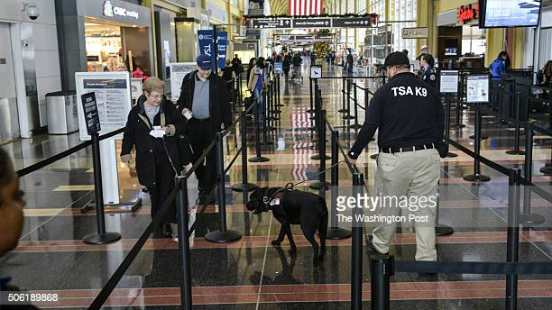 Michael Johns with the Transportation Security Administration demonstrates his work with a bombsniffing dog Rufus at National Airport on Tuesday...