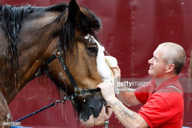 Michael Mayberry washes 'Poacher', a Clydesdale from Campbeltown before the 177th Royal Highland Show on June 21, 2017 in Edinburgh, Scotland. The...