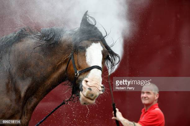 Michael Mayberry washes 'Poacher' a Clydesdale from Campbeltown before the 177th Royal Highland Show on June 21 2017 in Edinburgh Scotland The Royal...
