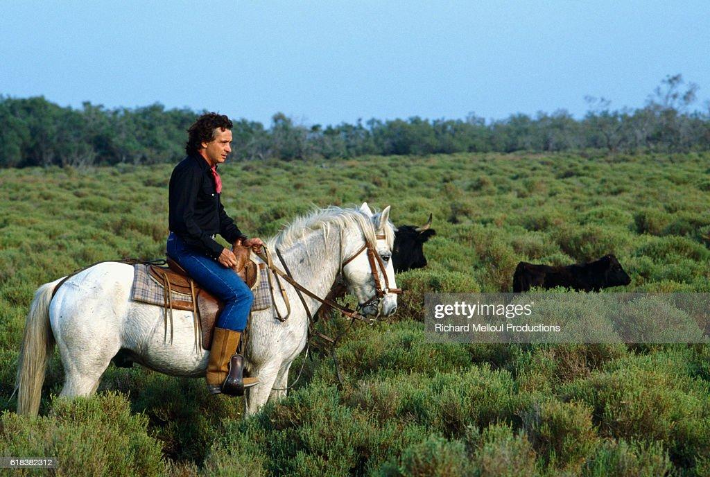 Michel Sardou Riding Horse in Camargue : Photo d'actualité