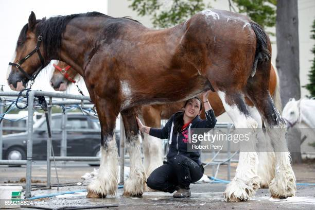 Michelle Mayberry washes 'Poacher' a Clydesdale from Campbeltown before the 177th Royal Highland Show on June 21 2017 in Edinburgh Scotland The Royal...