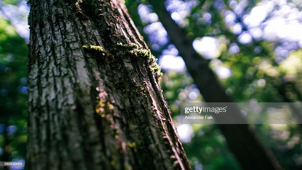 Michigan mossy oak : Stock Photo