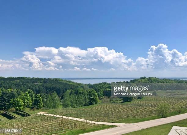 michigan vineyard - traverse city fotografías e imágenes de stock