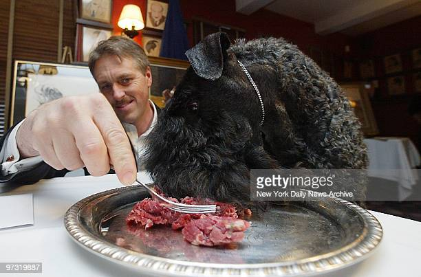 Mick fresh from last night's triumph at the 127th Westminster Kennel Club Dog Show is served his steak on a silver platter by handler Bill McFadden...