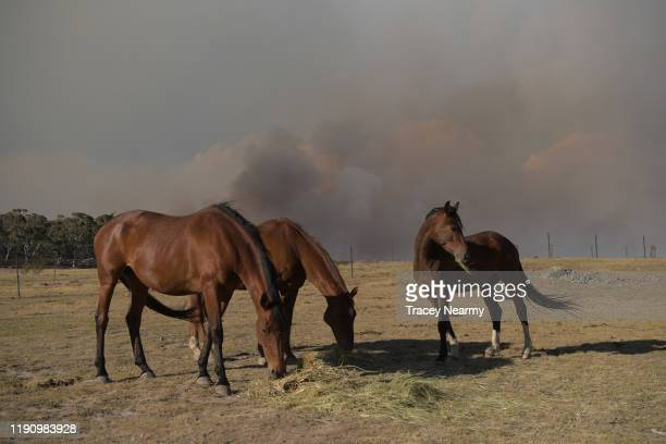 Mick Mason's Horses are kept safe in a paddock as firefighter battle to contain spot fires near the Tallaganda National Park outside of Braidwood on...