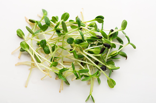 Micro greens top view isolated at white 892077222