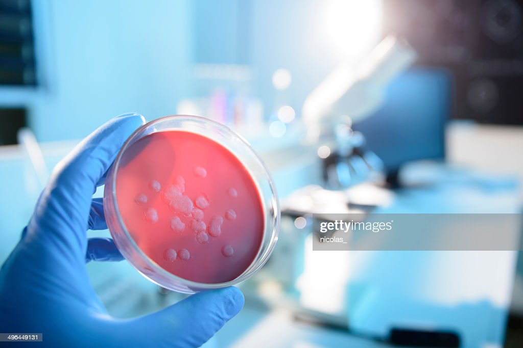 Microbiological Culture : Stock Photo