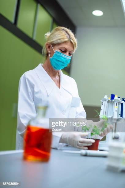 Mikrobiologe forschen auf Pflanzen, Bakterien und Viren
