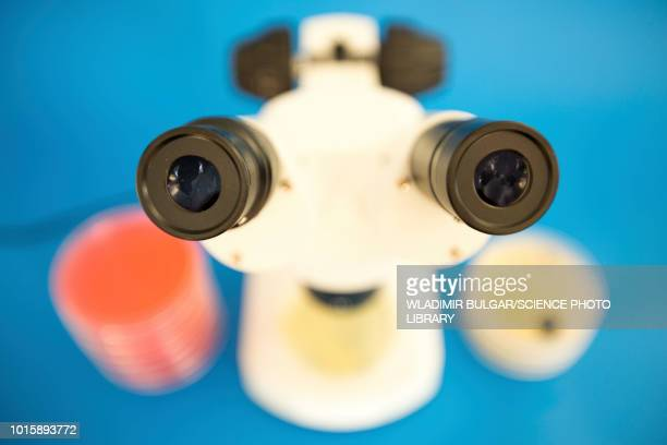 microbiology research - pareidolia stock pictures, royalty-free photos & images