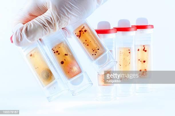 microbiologie tubes - latex photos et images de collection