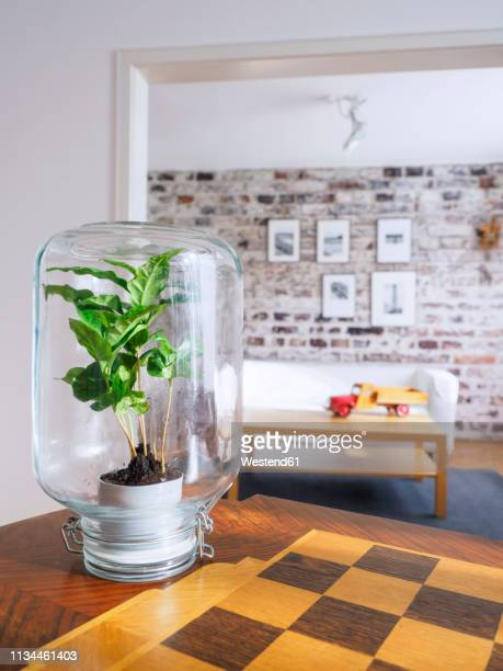 microclimate, coffee plant under glass, water, recycled, biotope in glass - klimaschutz stock-fotos und bilder
