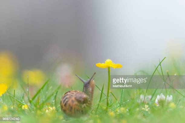 microcosmos, macrophotography of snail and flowers - limace photos et images de collection